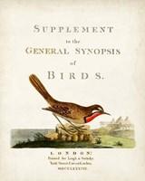 General Synopsis of Birds Fine Art Print