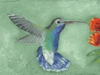 Fresco Hummingbird I Framed Print