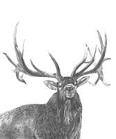Wildlife Snapshot: Elk Fine Art Print