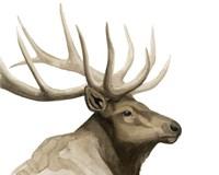 Call of the Elk I Fine Art Print