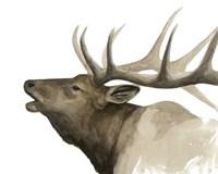Call of the Elk II Fine Art Print