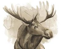 Bull Moose I Framed Print