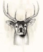Timberland Animals II Framed Print
