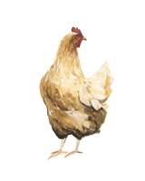 Autumn Chicken III Framed Print
