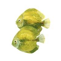 Discus Fish II Fine Art Print