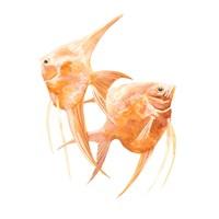Discus Fish IV Framed Print