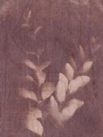 Botanical Sun II Fine Art Print