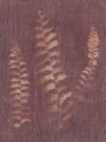 Botanical Sun IV Fine Art Print