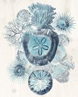 Coastal Melange I Fine Art Print