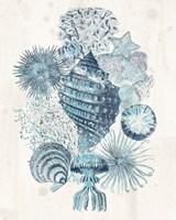 Coastal Melange II Fine Art Print