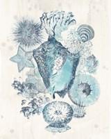 Coastal Melange III Fine Art Print