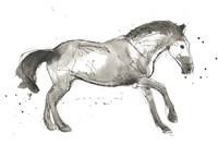 Equine Impressions I Framed Print