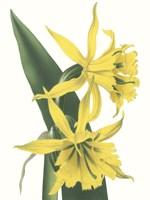 Floral Beauty VIII Framed Print