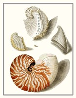 Collected Shells I Fine Art Print