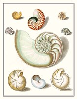Collected Shells II Framed Print