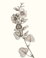 Neutral Botanical Study I Fine Art Print