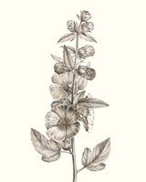 Neutral Botanical Study V Fine Art Print