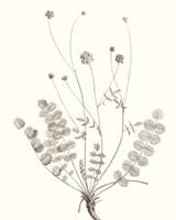 Neutral Botanical Study IX Fine Art Print