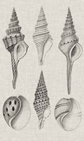 Charcoal & Linen Shells II Framed Print