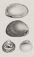 Charcoal & Linen Shells VIII Fine Art Print
