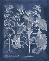 Besler Leaves in Indigo I Fine Art Print