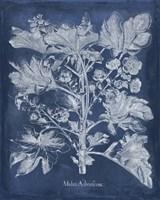 Besler Leaves in Indigo II Fine Art Print