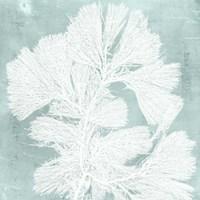 Seaweed on Aqua IV Fine Art Print