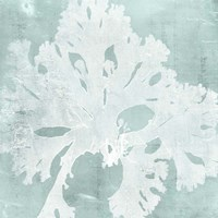 Seaweed on Aqua V Fine Art Print