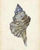 Watercolor Seashell III Framed Print
