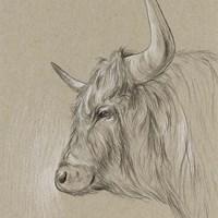 Bison Sketch II Fine Art Print