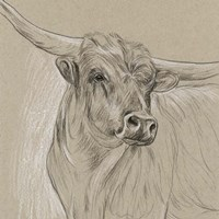 Longhorn Sketch I Fine Art Print