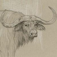 Longhorn Sketch II Fine Art Print
