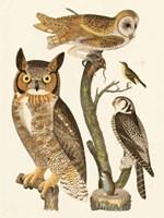 Wilson Owls I Fine Art Print