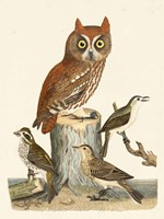Wilson Owls II Fine Art Print