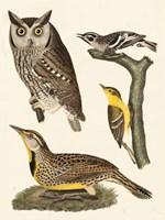Wilson Owls III Fine Art Print