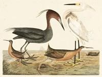 Heron Family IV Fine Art Print