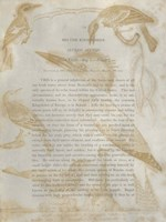 Ornithology Impressions I Framed Print