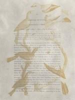 Ornithology Impressions II Framed Print