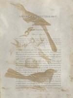 Ornithology Impressions III Fine Art Print
