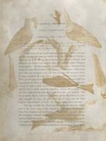 Ornithology Impressions IV Framed Print