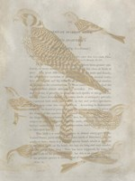 Ornithology Impressions V Framed Print