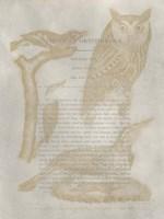 Ornithology Impressions VI Framed Print