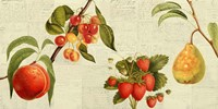 Fruits de Saison Fine Art Print