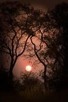 Okavango Delta, Botswana Sunset Behind Tall Trees Fine Art Print