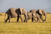 Africa, Kenya, Amboseli National Park, Elephant Fine Art Print