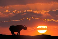 Kenya, Masai Mara Composite Of White Rhino Silhouette And Sunset Fine Art Print