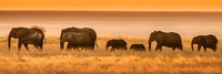 Etosha National Park, Namibia, Elephants Walk In A Line At Sunset Fine Art Print