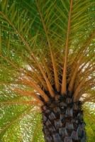 British Virgin Islands, Scrub Island Close Up Of The Underside Of A Palm Tree Fine Art Print