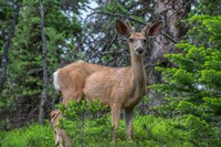 Deer In The Assiniboine Park, Canada Fine Art Print