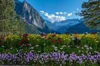 Wildflowers In Banff National Park Fine Art Print
